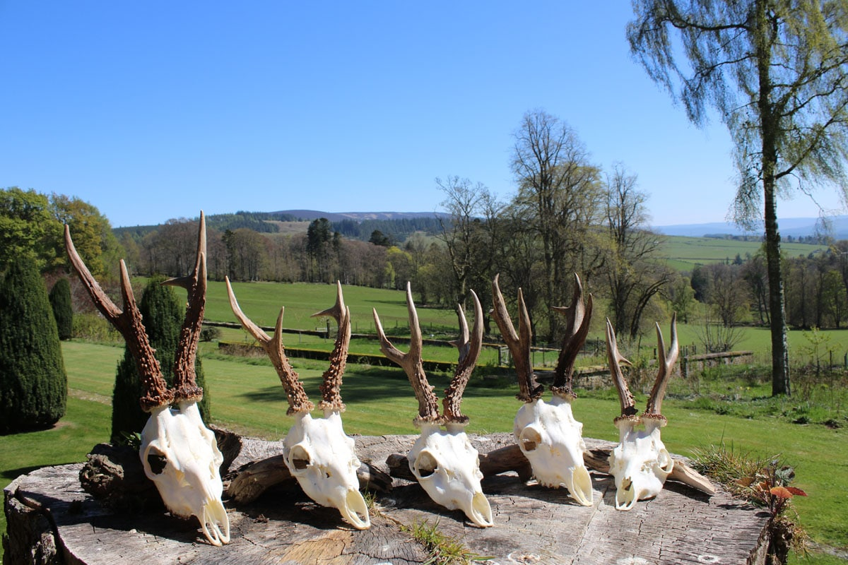 Jagtrejser til Craigston Castle i Skotland